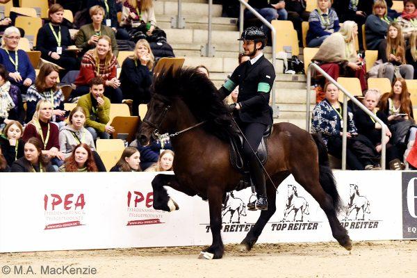 MCK7934 Pistill and Nils 4-gait stallion show 240218