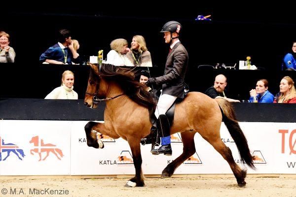 MCK7953 Muni and Dennis 4-gait stallion show 240218