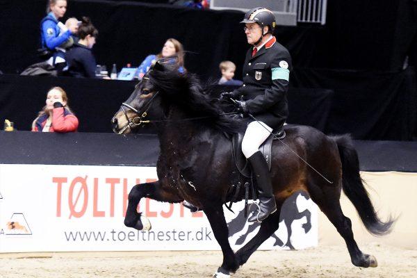 MCK8171 Starri and Uli 5-gait stallion show 240218