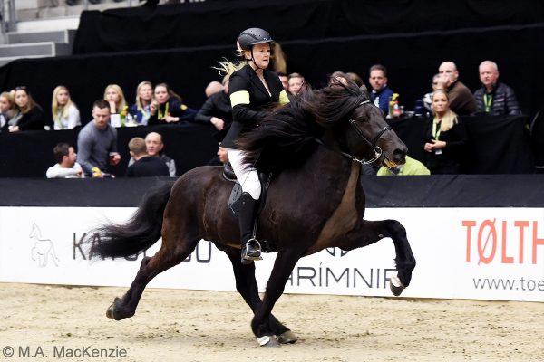 MCK8199 Divar and Julie 5-gait stallion show 240218
