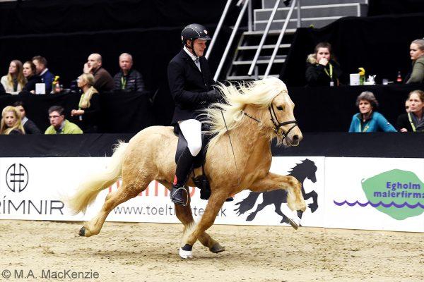 MCK8254 Skinfaxi and Soren 5-gait stallion show 240218