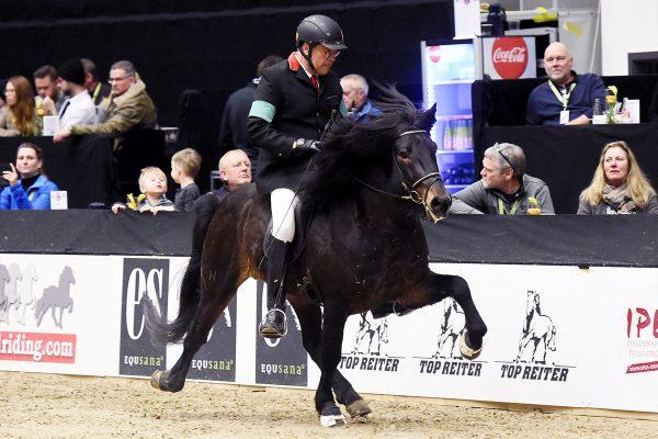 MCK8269 Starri and Uli 5-gait stallion show 240218