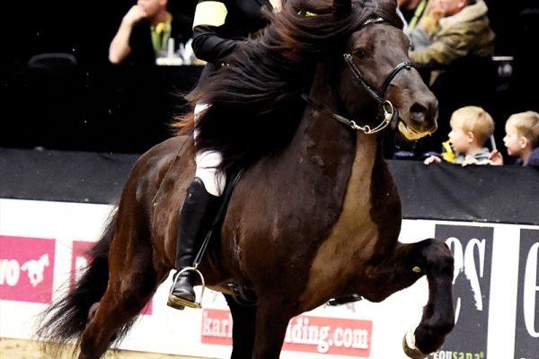 MCK8337 Divar and Julie 5-gait stallion show 240218 Power