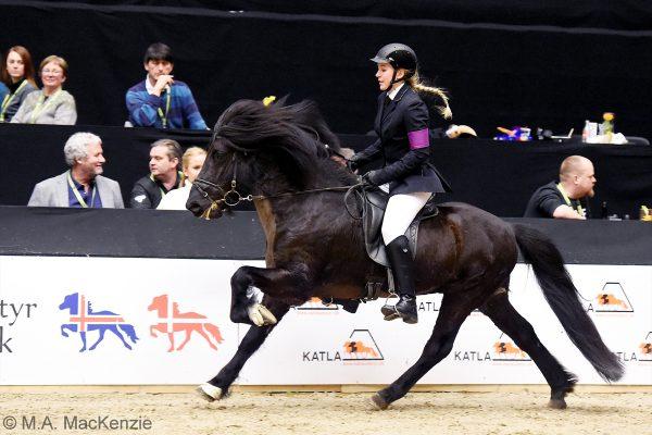 MCK8362 Sjóli and Anne Stine 5-gait stallion show 240218