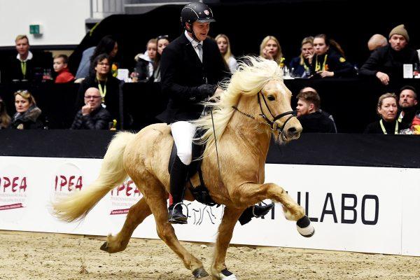 MCK8387 Skinfaxi and Soren 5-gait stallion show 240218