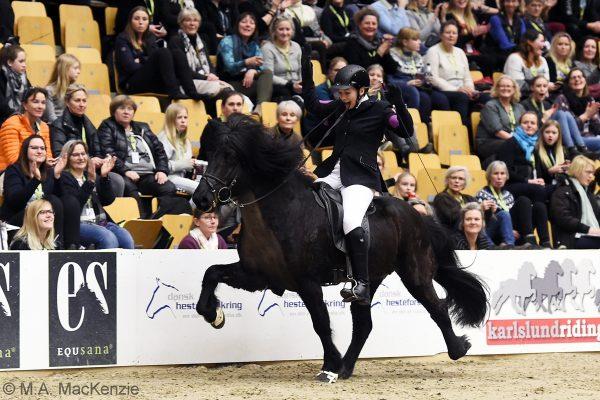 MCK8432 Sjóli and Anne Stine WOW Stallion show WT240218