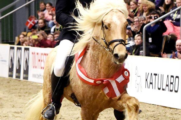 MCK8690 Skinfaxi and Soren winner 5-gait stallion show 240218