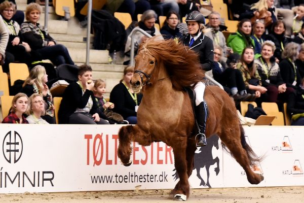 MCK9804 Jarl and Steffi 4-gait stallion show 240218