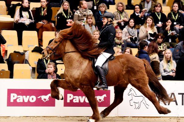 MCK9819 Jarl and Steffi 4-gait stallion show 240218