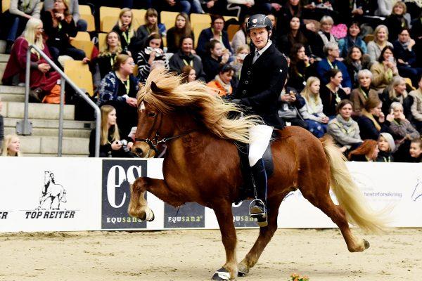 MCK9963 Snorri and Soren 4-gait stallion show 240218