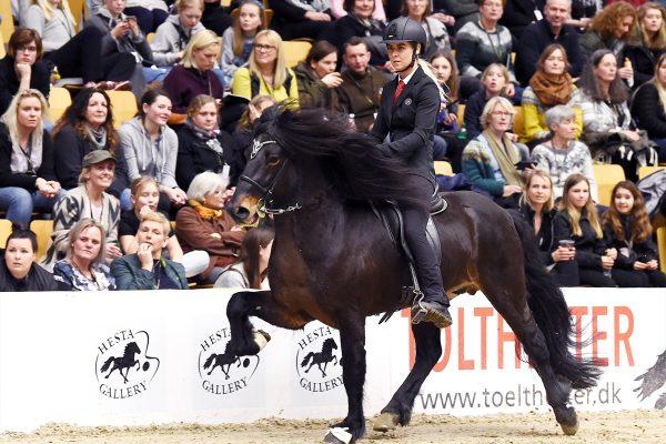 MCK2059 Breeding show Pegasus 230219