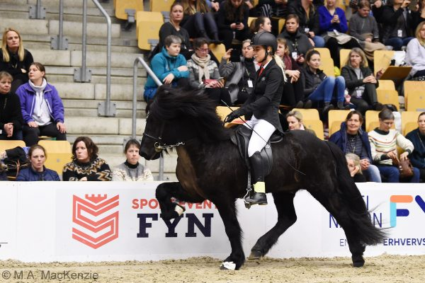MCK6102 Tinni 230219 Stallion show