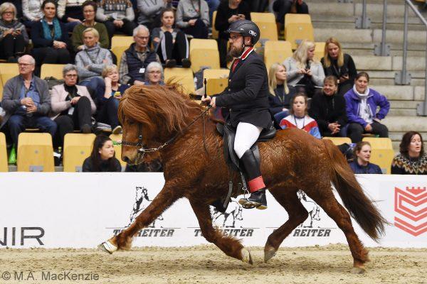 MCK6245 Kraftur 230219 Stallion show