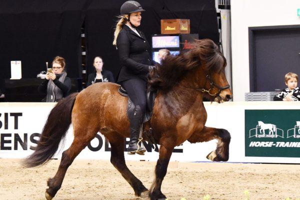 MCK0458 Oddsteinn stallion show 220220