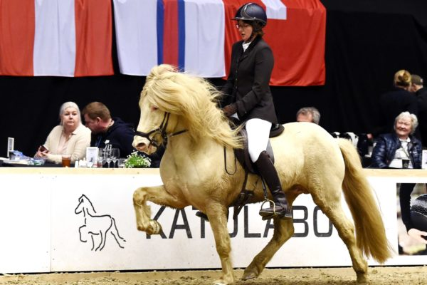 MCK0618 Limbó stallion show 220220