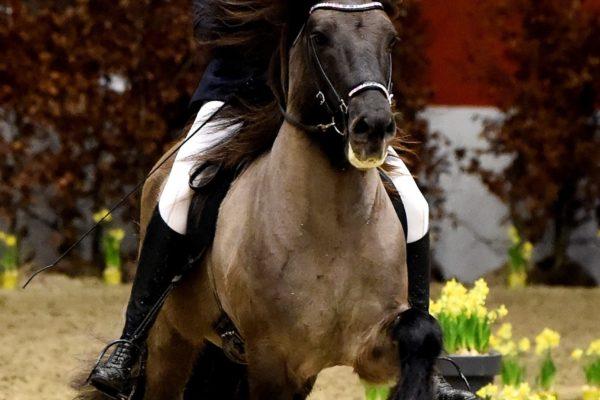 MCK0702 Barón and Christa 220220 stallion show
