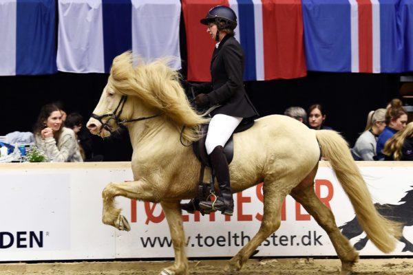 MCK0777 Limbó stallion show 220220