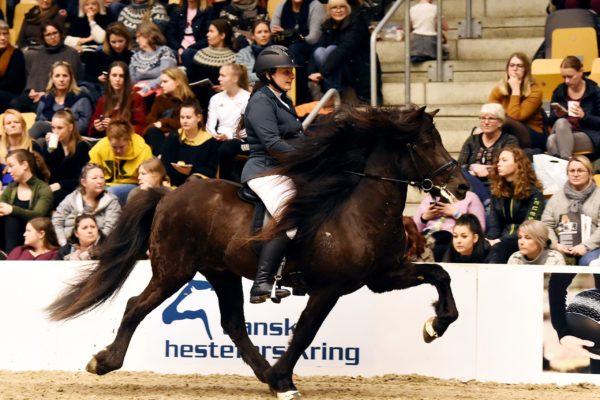MCK0931 Divar stallion show 2202220