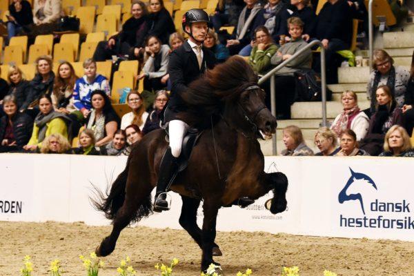 MCK0935 Eldjarn stallion show 220220