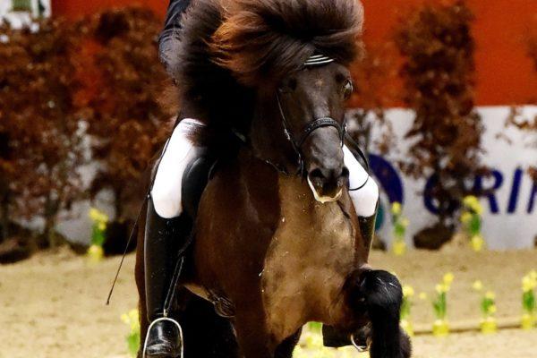MCK0979 Eldjarn stallion show 220220