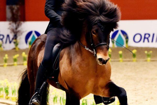 MCK1167 Sjarmör stallion show 220220