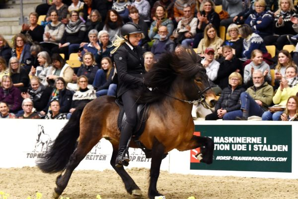 MCK1171 Sjarmör stallion show 220220