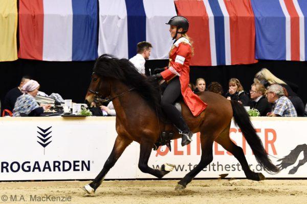 MCK4367 Morgan stallion show 220220