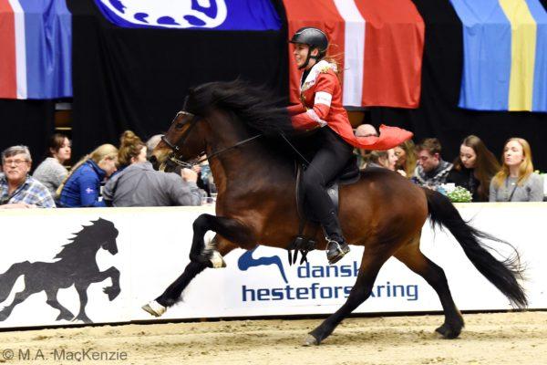 MCK4452 Morgan stallion show 220220