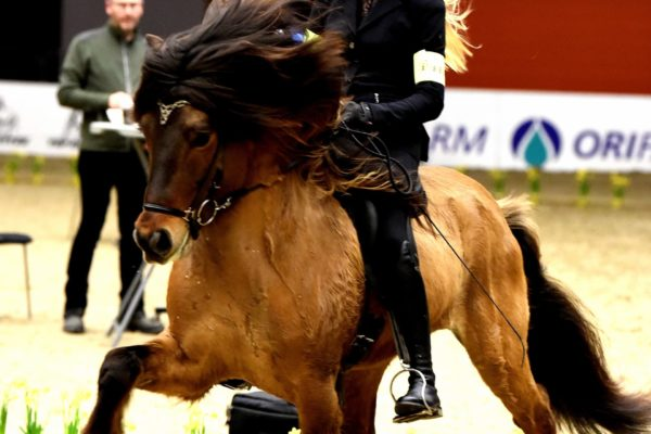 MCK4502 Vökull and Kristiane 220220 Stallion show final